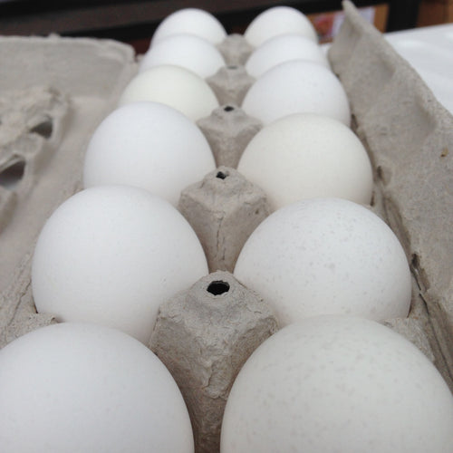 Eggs (Maple Meadow Farm)