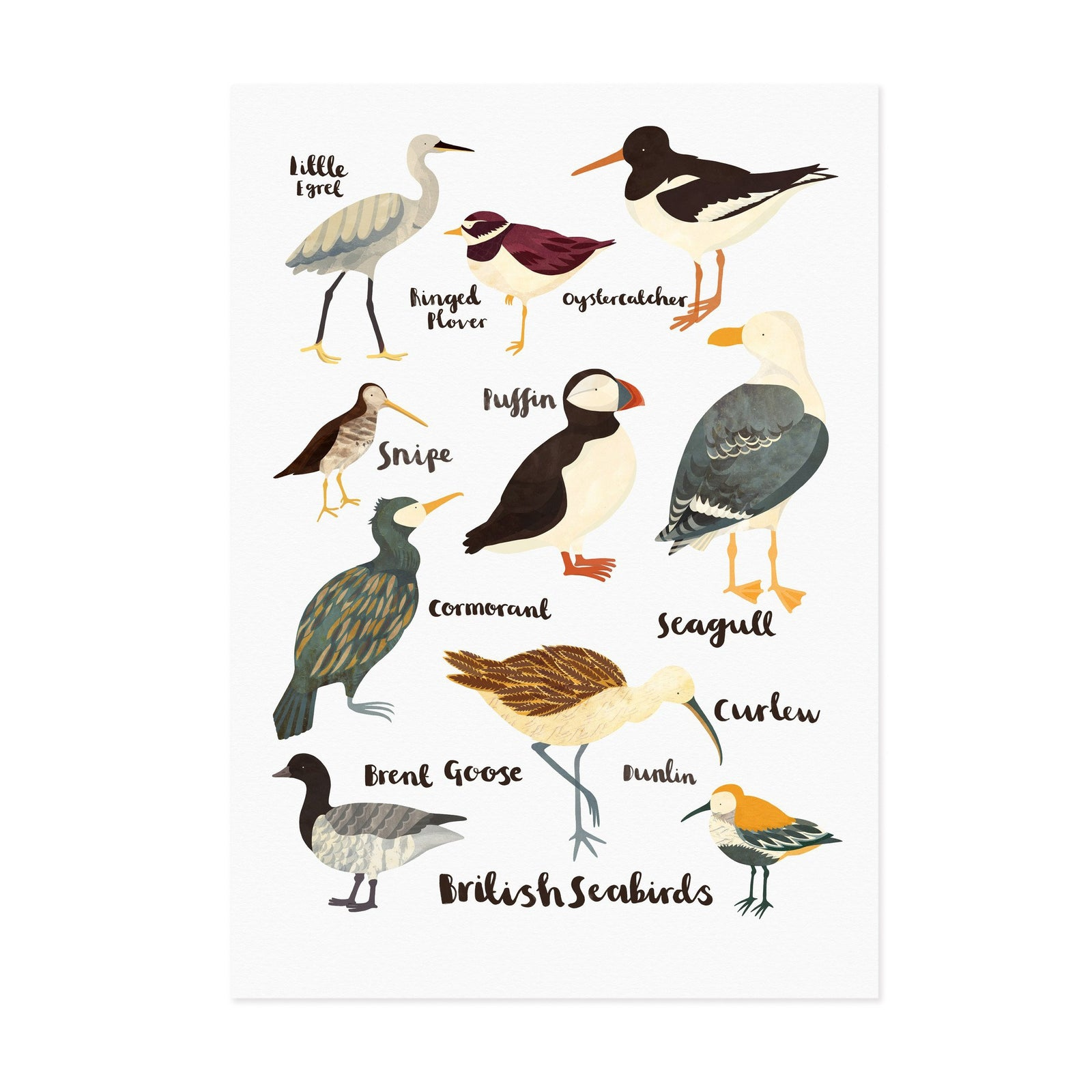 british sea birds lauren radley british sea birds