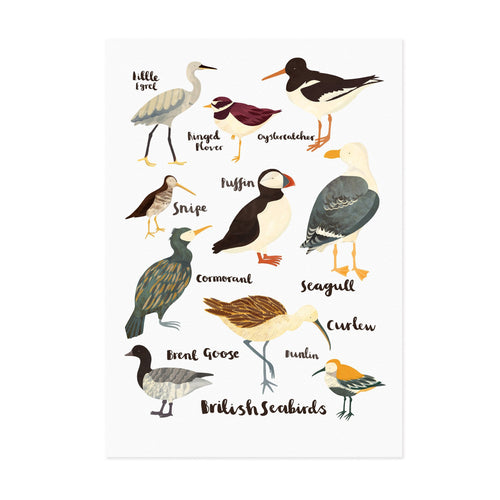 British Sea Birds - Lauren Radley