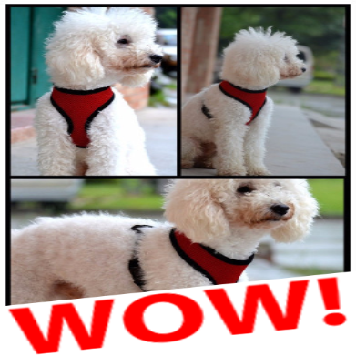 Beautiful Nylon-Mesh Dog Harness - PawMerch
