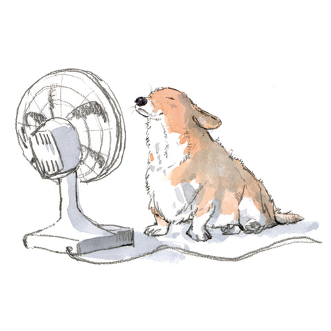 corgi keeping cool in front of a fan