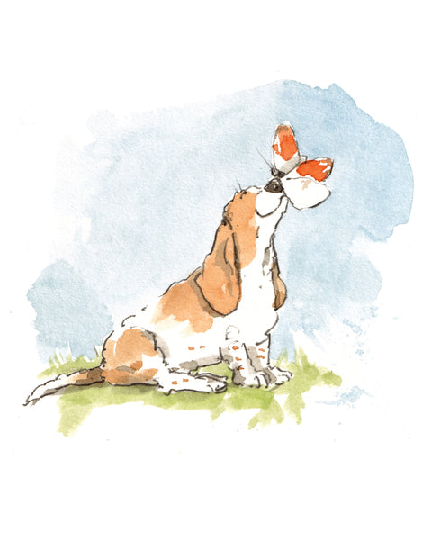 Basset hound and an orange tip butterfly, giclee print, 8x10 inches £35