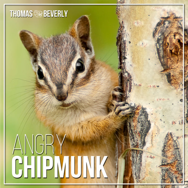 SD26 Angry Chipmunk