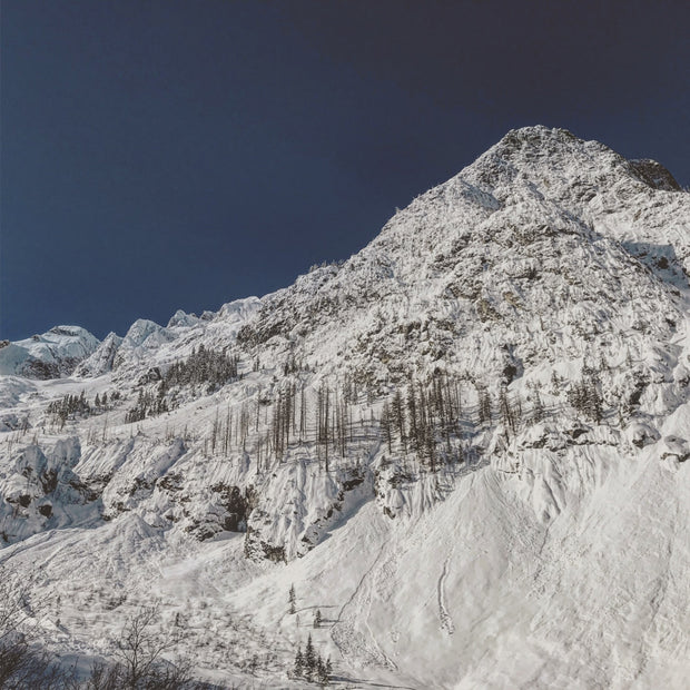 SD21 Avalanche and Tree-alanche