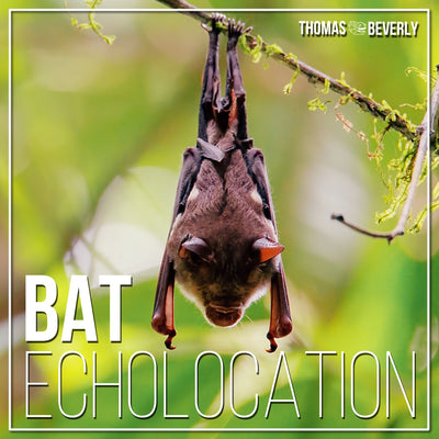 SD23 Bat Echolocation