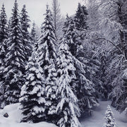 AMB31 Pacific Northwest: Falling Snow