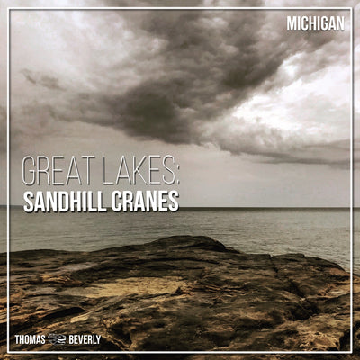 AMB19 Great Lakes: Sandhill Cranes