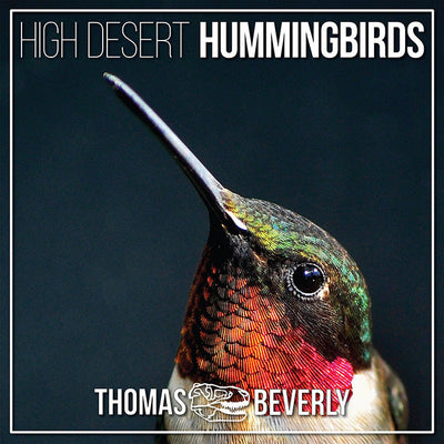 High Desert Hummingbirds - Sound Effects Library from Thomas Rex Beverly