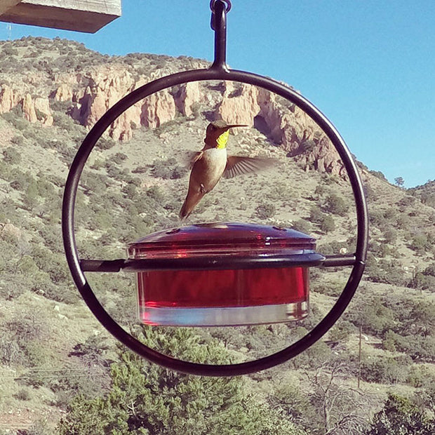 SD01 High Desert Hummingbirds