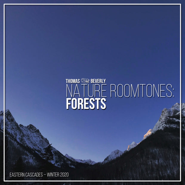 AMB30 Nature Roomtones: Forests