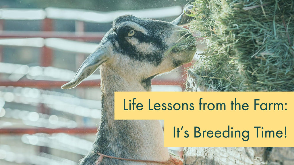 Life Lessons from the Farm: It's Breeding Time!
