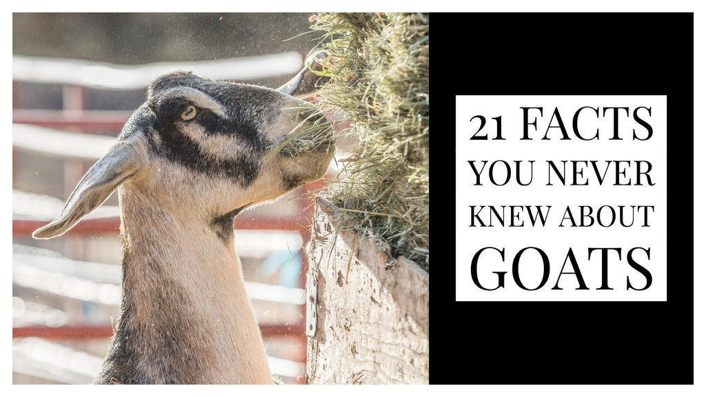 21 Facts You Never Knew About Goats