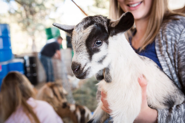 Meet the Goats at Bend Soap Company