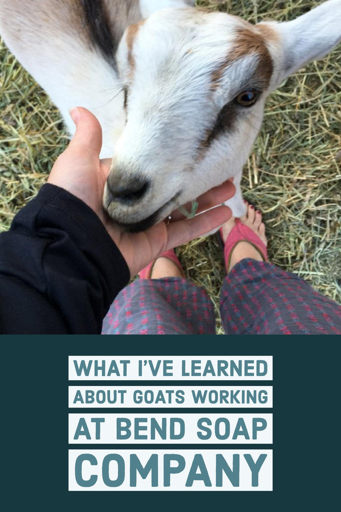 What I've Learned About Goats Working at Bend Soap Company