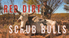 RED DIRT SCRUB BULLS