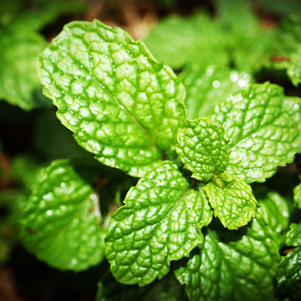 Three things that will change the way you look at peppermint