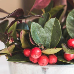 Top 3 things to know about oil of wintergreen