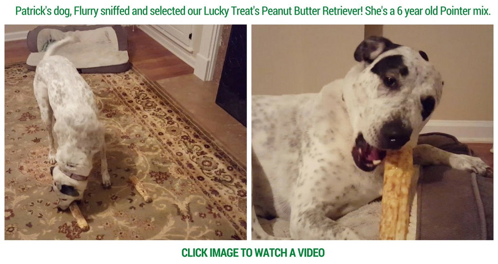 Flurry selects Lucky Treats for her favorite Peanut Butter Retriever Rawhide!