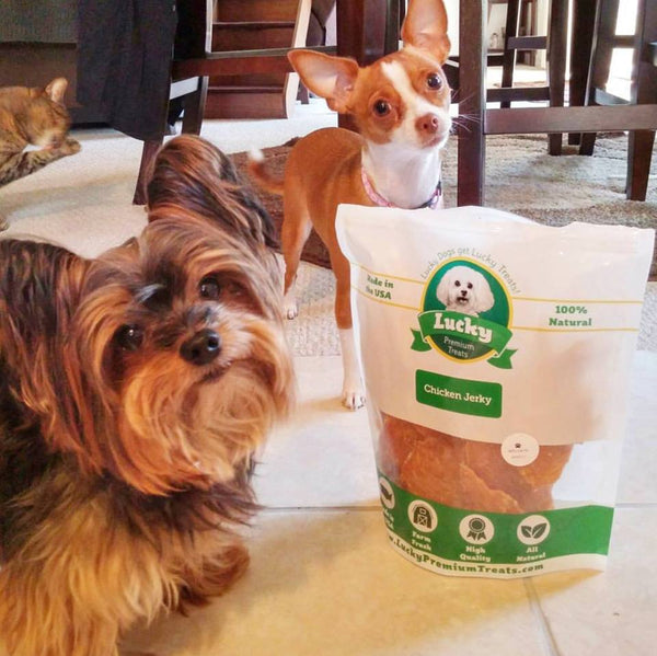 Gizmo & Chloe getting their Lucky Treats (Michelle's dogs).
