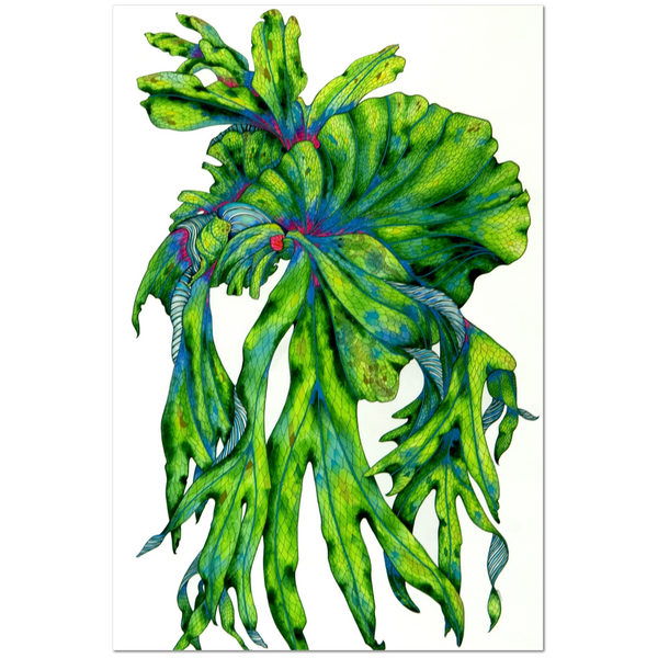 "Staghorn Blossoms - 24""x 36"" Print"