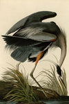 Great Blue Heron - Wooden Jigsaw Puzzles for Adults