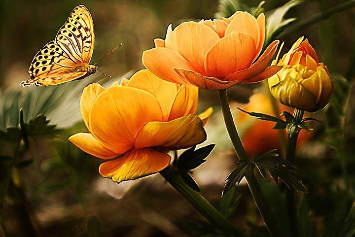 Beautiful Flowers with Butterfly - Wooden Jigsaw Puzzles for Adults