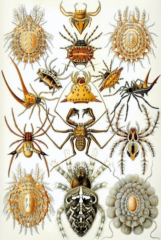 Arachnida by Ernst Haeckel - Peaceful Wooden Puzzles