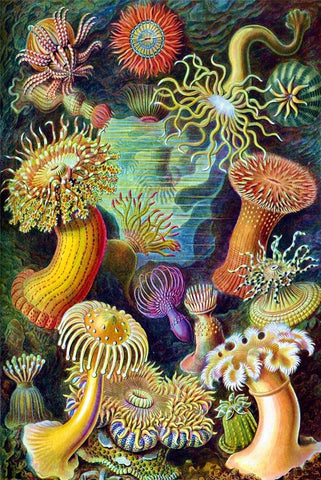 Sea Anemones by Ernst Haeckel - Peaceful Wooden Jigsaw Puzzles