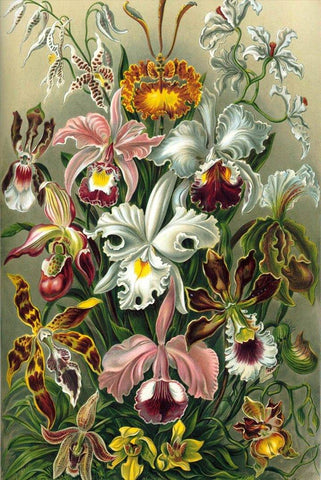 Orchids by Ernst Haeckel - Peaceful Wooden Jigsaw Puzzles