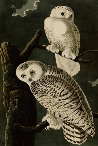 Snowy Owl - Wooden Jigsaw Puzzles for Adults