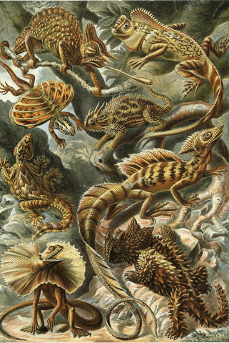 Lacertilia by Ernst Haeckel - Peaceful Wooden Jigsaw Puzzles
