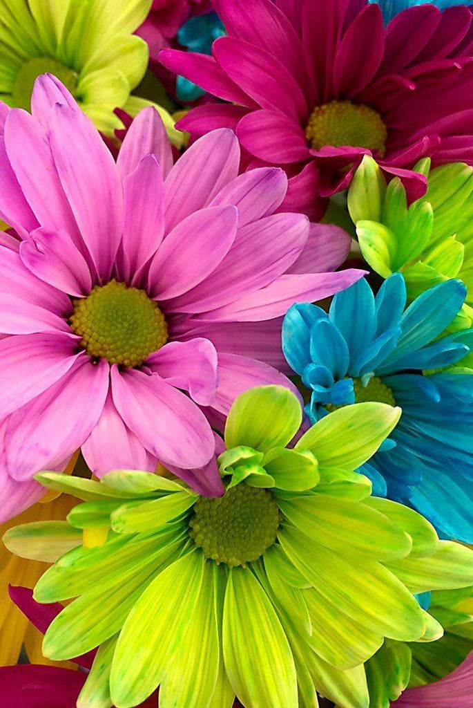 Colorful Gerber Daisies - Peaceful Wooden Puzzles