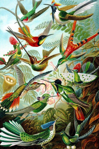 Hummingbirds by Ernst Haeckel Peaceful Wooden Puzzles