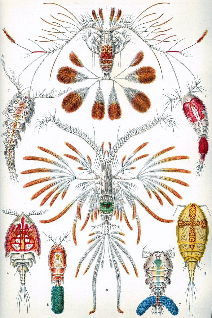 Crustaceans by Ernst Haeckel - Wooden Jigsaw Puzzles for Adults