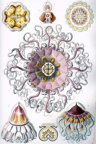 Peromedusae by Ernst Haeckel - Peaceful Wooden Jigsaw Puzzles