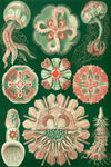 Jellyfish by Ernst Haeckel - Wooden Jigsaw Puzzles for Adults
