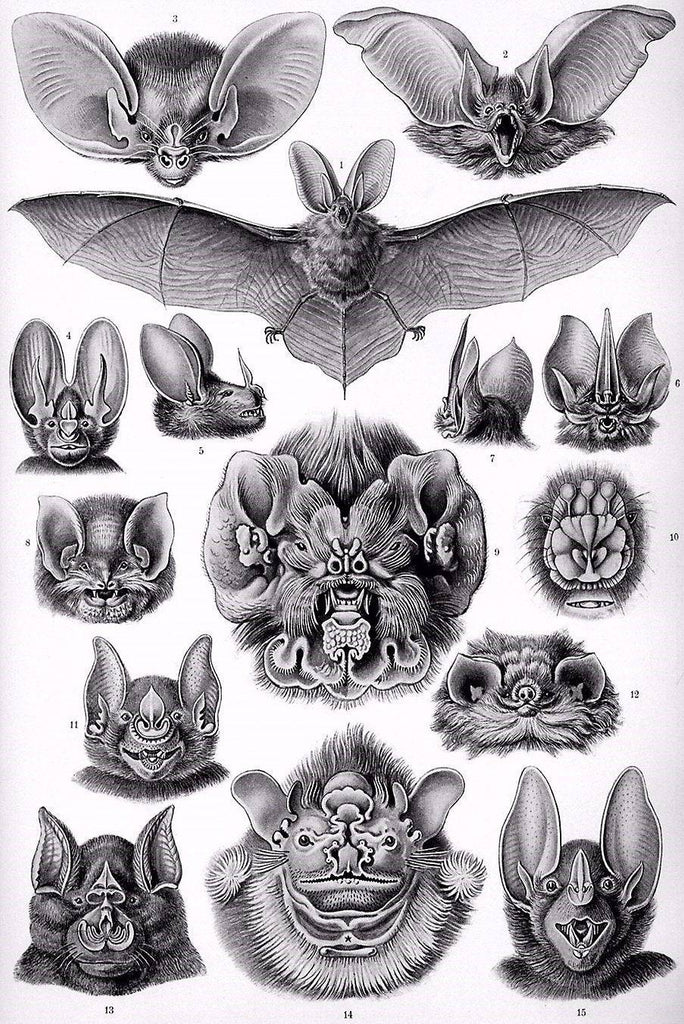 Bats by Ernst Haeckel - Peaceful Wooden Puzzles