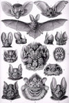 Bats by Ernst Haeckel - Wooden Jigsaw Puzzles for Adults