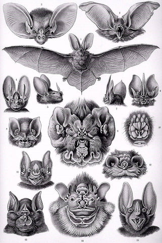 Bats by Ernst Haeckel - Peaceful Wooden Jigsaw Puzzles