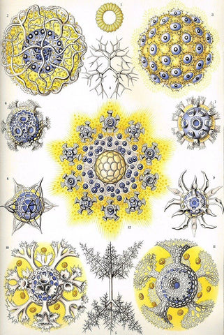 Polycyttaria by Ernst Haeckel - Wooden Jigsaw Puzzles for Adults