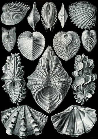 Acephala by Ernst Haeckel - Peaceful Wooden Jigsaw Puzzles