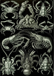 Decapoda by Ernst Haeckel - Peaceful Wooden Jigsaw Puzzles