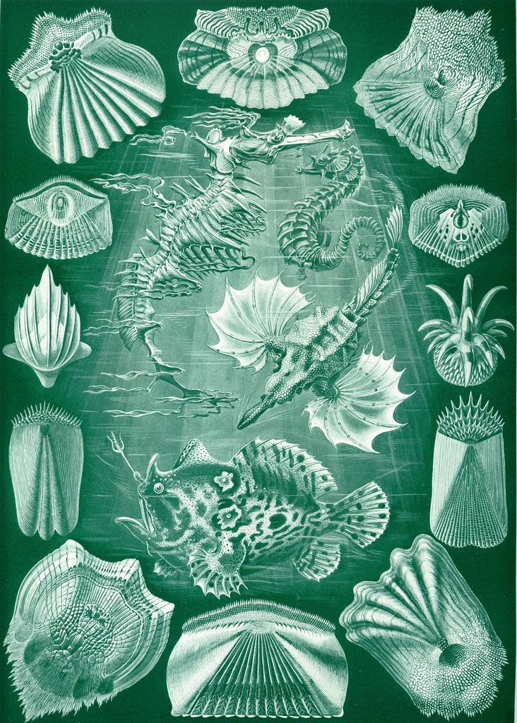 Teleostei by Ernst Haeckel Peaceful Wooden Puzzles