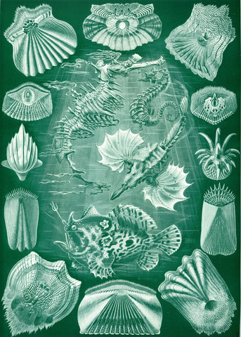 Teleostei by Ernst Haeckel - Wooden Jigsaw Puzzles for Adults
