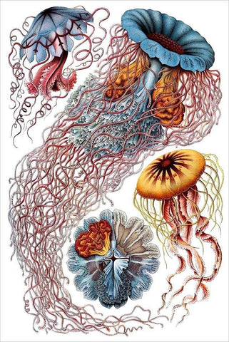 Kunstformen der Natur by Ernst Haeckel - Wooden Jigsaw Puzzles for Adults