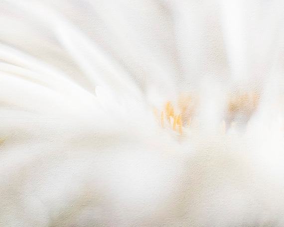 Abstract Daisy - White Farmhouse Wall Art