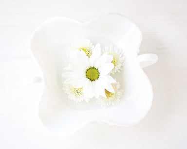 Alabaster - White Daisy Wall Art Print