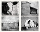 Farm Animal Set of Black and White Prints
