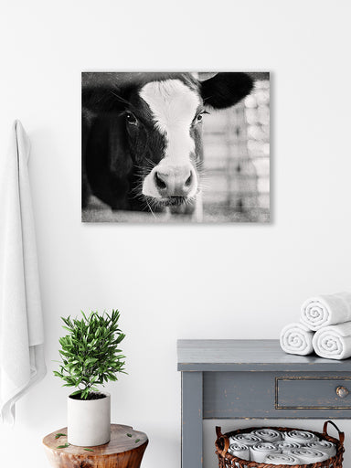 Baby Holstein - Rustic Cow Art Print for your Farmhouse Decor