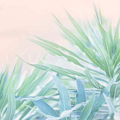 Calm Palms - Modern Pastel Wall Art